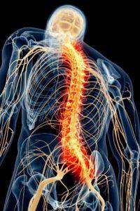 descripción gráfica del nacimiento del nervio ciático