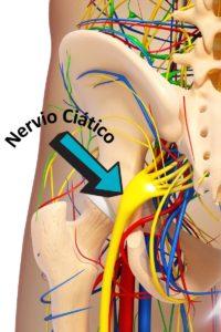 salida del nervio ciático a la pierna
